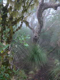 Border Ranges NP cool temperate rainforest